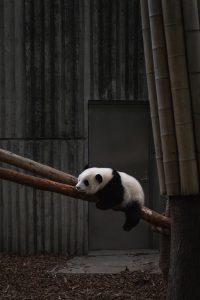 Using Pandas Dataframes with GridDB